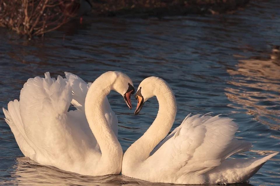 【宇宙メッセージ】愛の重要性